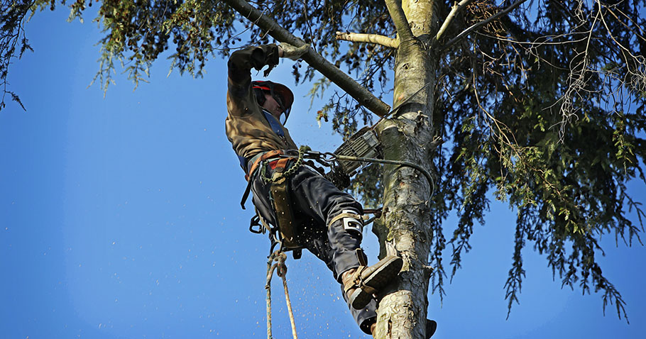 7 Common Tree Pruning Mistakes You Should Avoid